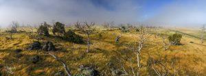 Climate testing the next generation of Snowy Monaro eucalyptus